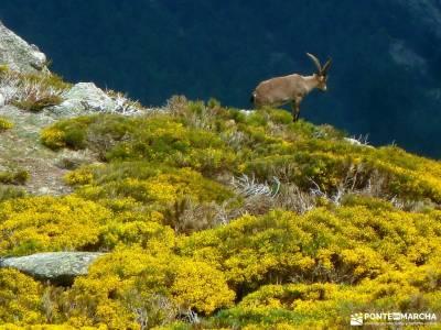 Cuerda Larga-Navacerrada a Morcuera-Sierra Guadarrama; senderistas madrid excursiones de senderismo